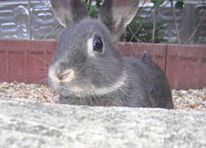 ウサギ-1